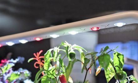 Indoor-Gardening: Wenn die Küche zum Gartenparadies wird