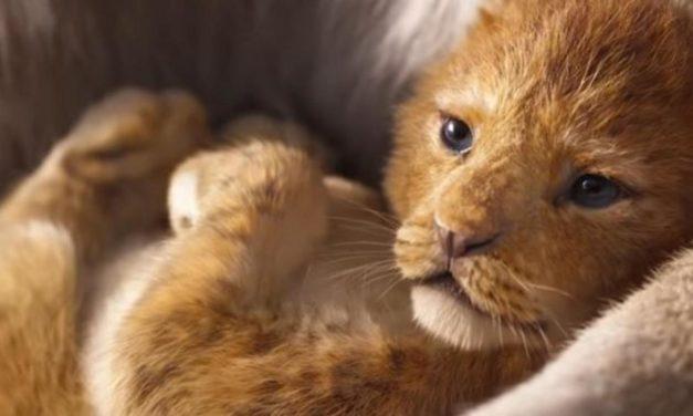 """""""Der König der Löwen"""": Der erste Trailer ist raus – so reagiert das Netz"""