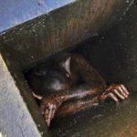 Einbrecher bleibt im Fettabzug von China-Restaurant stecken
