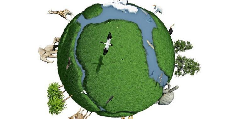 Blinde Passagiere: Was neue Tier- und Pflanzenarten für unsere Umwelt bedeuten