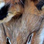 Los Angeles will Verkauf von Pelzwaren verbieten
