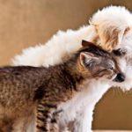 Katzenkuscheln und Hundeausführen