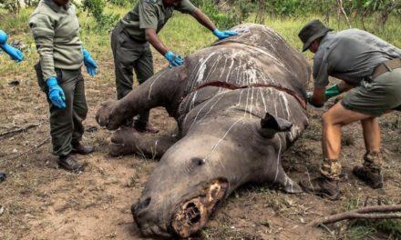 """Vorwürfe gegen WWF: """"Sich selbst immensen Schaden zugefügt"""""""