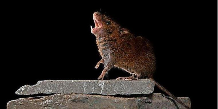 Was singende Mäuse mit einem Gespräch zwischen zwei Menschen zu tun haben