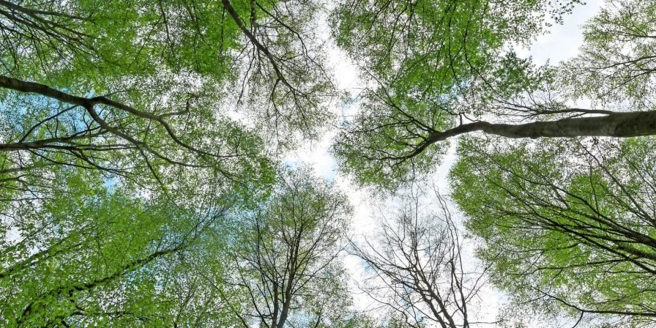 Darum helfen schon 20 Minuten im Wald gegen Stress