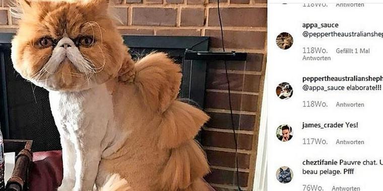 Darum werden Katzen plötzlich wie Dinos rasiert