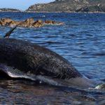 Warum Plastikmüll für Wale so gefährlich ist