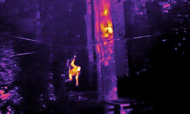 Mit Drohnen auf der Suche nach Orang-Utans