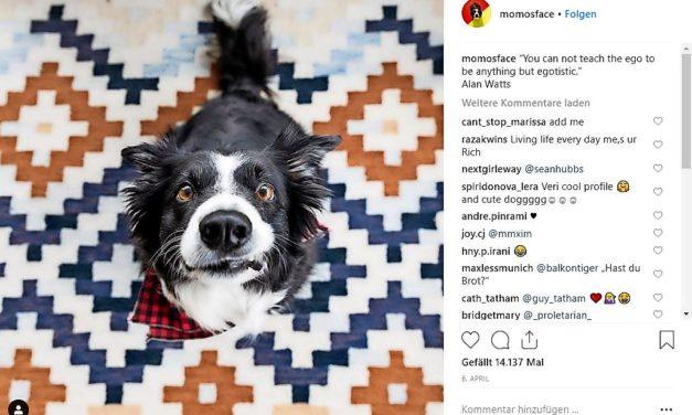 Momosface auf Instagram: Ein Hunde-Leben auf Instagram