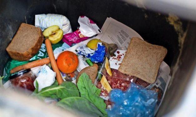 "Weggeworfene Lebensmittel: Hamburg will das ""Containern"" erlauben"