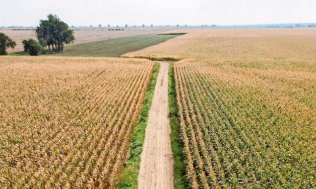 Umweltverbände mahnen: EU fällt beim Artenschutz durch