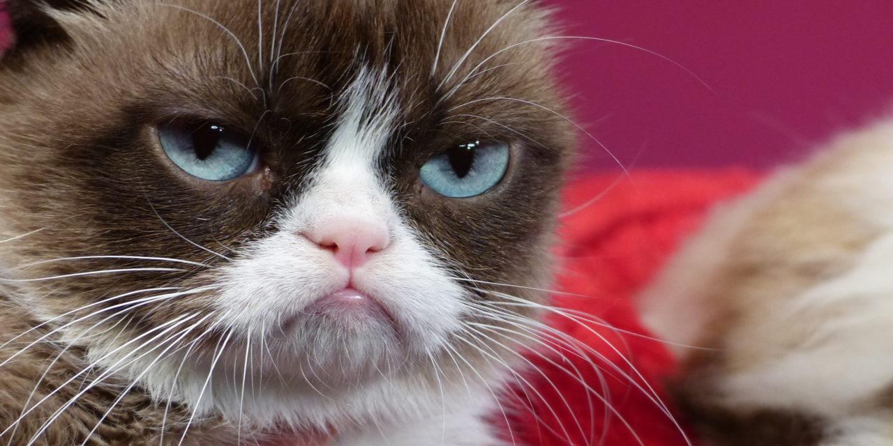 Grumpy Cat ist tot: Darum werden wir sie vermissen