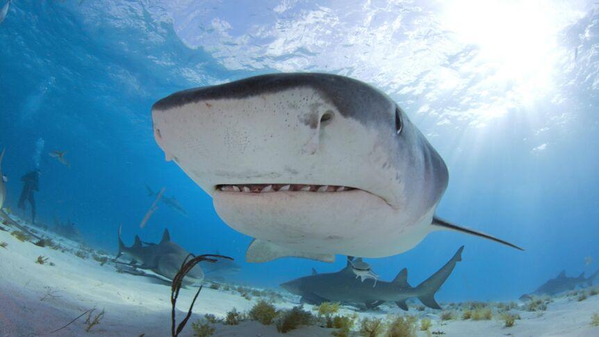 Bahamas-Urlauberin (21) beim Schnorcheln von Haien getötet