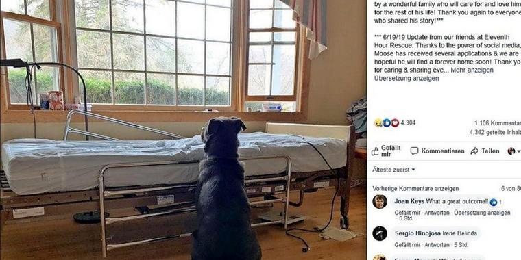 Trauriges Foto geht um die Welt: Hund wartet an Krankenhausbett auf verstorbenen Besitzer