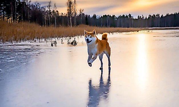 Ein Hund geht auf Reisen: Das zeigt der Instagrammaccount @cmaiadventures