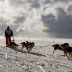"""Huskys landen in den USA in Tierheimen – weil """"Game of Thrones"""" vorbei ist"""