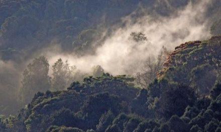 Rekord: Äthiopien pflanzt an einem Tag mehr als 350 Millionen Bäume
