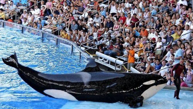 Seaworld-Trainer klagt an: Killerwale werden betäubt und ausgehungert