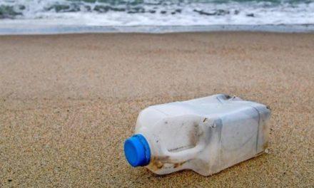 Tierischer Umweltschützer: Hund sammelt 3000 Plastikflaschen am Strand