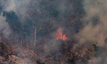 Ein verbrannter Ameisenbär wird zum Symbol der Amazonas-Katastrophe