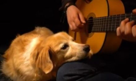 @Acoustictrench kombiniert Hundevideos und musikalisches Talent
