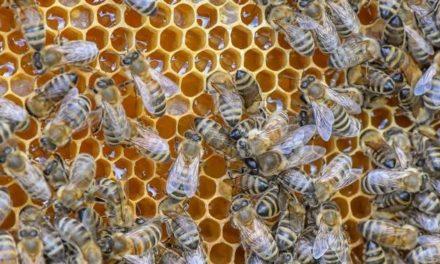 Mann sitzt 82 Tage unschuldig im Gefängnis – weil Zollbeamte Honig für Drogen halten