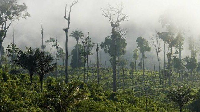 #PrayforAmazonia: Brasiliens Regenwald steht in Flammen – im Netz formiert sich Protest