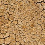 Wenn die Erde Durst hat: Folgen der weltweiten Dürrekrise
