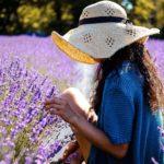 Lavendelbauern wehren sich gegen Influencer in ihren Feldern