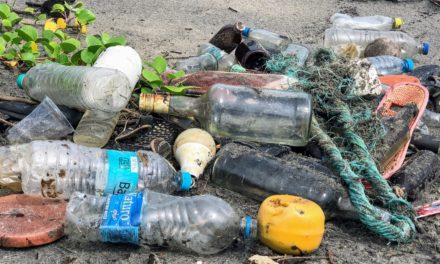 Getränkeflaschenkodex: Warum man auf Einwegflaschen aus Glas verzichten sollte