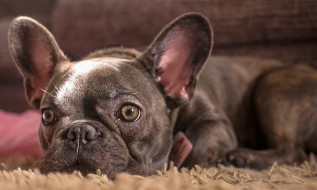 Mann (25) erliegt Krebsleiden – 15 Minuten später stirbt auch sein Hund