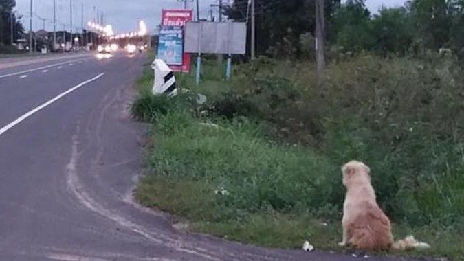 Treuer Hund wartet vier Jahre lang an Straße auf sein Frauchen