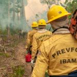 Amazonas-Brände: H&M stoppt Ledereinfuhr aus Brasilien