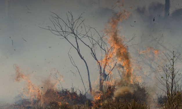 Feuer am Amazonas: Immer mehr Kinder wegen Luftverschmutzung in Klinik