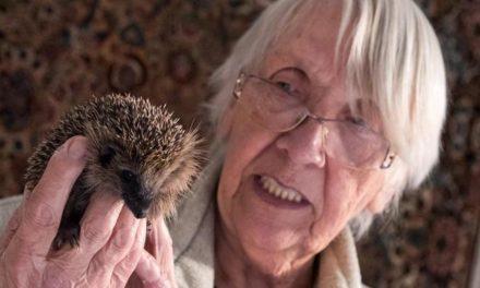 81-Jährige zieht 79 kleine Igel in ihrem Wohnzimmer groß