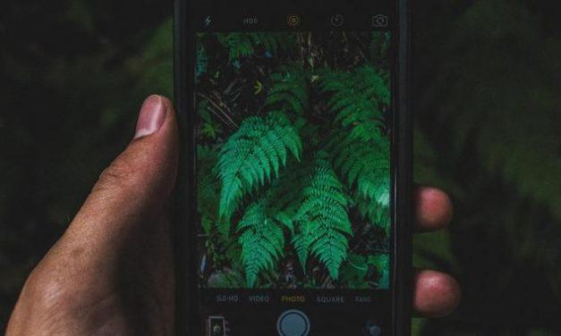 Nachhaltigkeit auf's Handy: 10 Apps für einen grüneren Alltag
