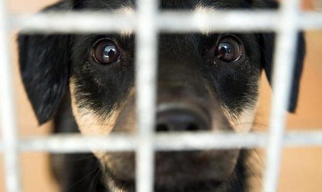 Mallorca verbietet die Tötung von ausgesetzten Haustieren