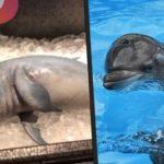 """Influencer klärt auf: Das steckt hinter dem """"gegessenen"""" Babydelfin"""