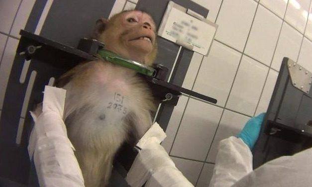 Grausame Tierquälerei? Staatsanwälte ermitteln gegen Labor – Demo am Samstag