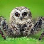 Tierhybride aus Norwegen: So kreativ ist der Instagramkanal @gyyporama