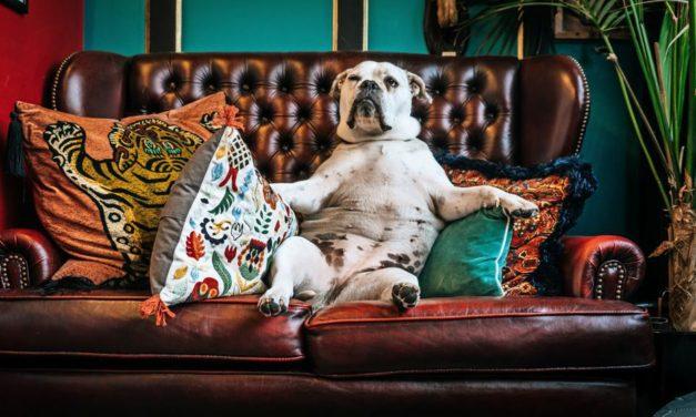 #MADSkolumne: Liebes Sofa