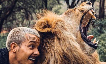 Vom Büro in die Wildnis: Dean Schneider und seine Löwen