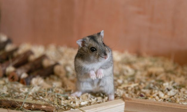 Mads-Kolumne: Lieber Hamster,