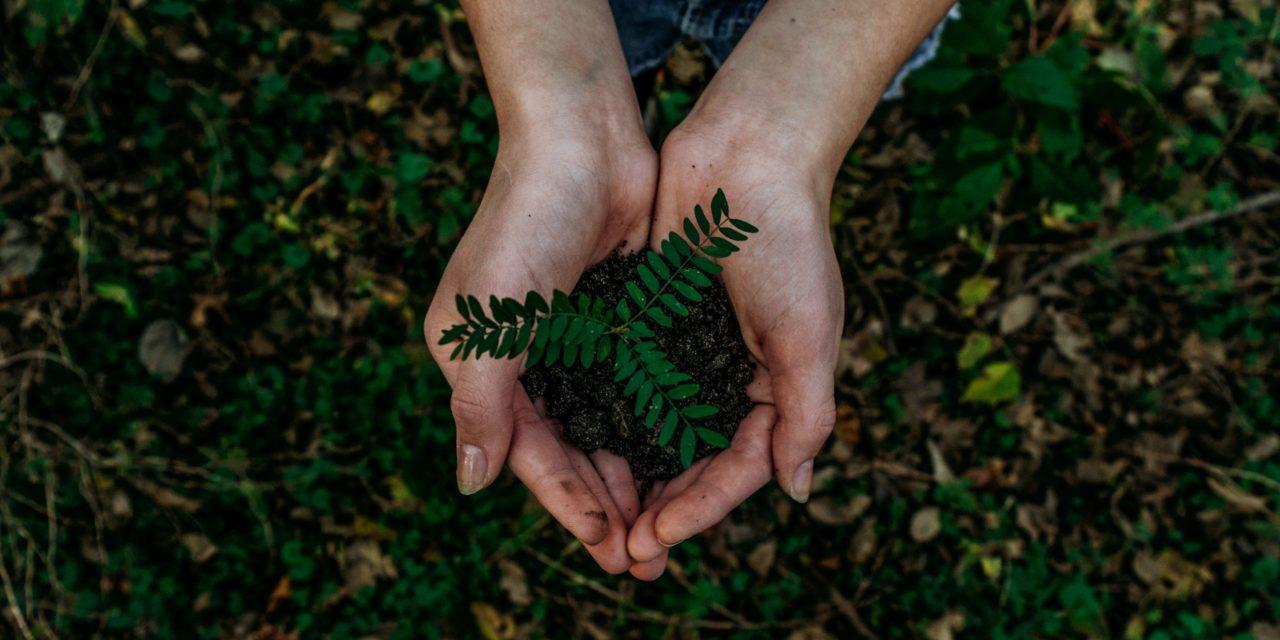 """""""Earth Day"""": Darum ist der Tag der Erde seit 50 Jahren wichtig"""