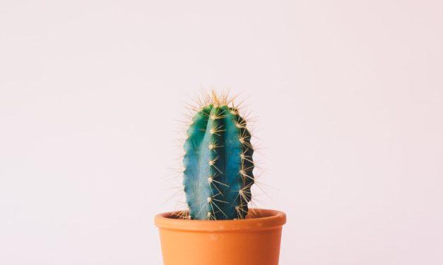 MADS-Kolumne: Liebe Zimmerpflanze,