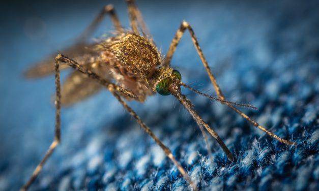 MADS-Kolumne: Liebe Mücken,