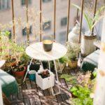 Gärtnern auf Balkonien: Sieben Tipps für Anfänger