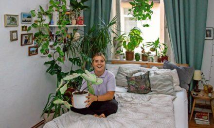 Urban Jungle: Sheila (20) hat einen Dschungel im WG-Zimmer