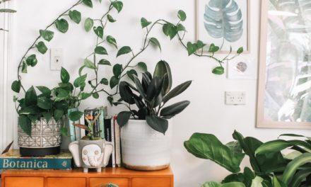 Acht Tipps für Einsteiger: So findest du die richtigen Zimmerpflanzen