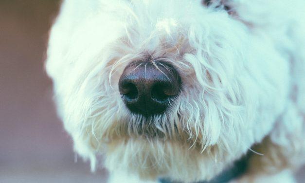 Gegen schlechte Laune: Deshalb braucht Twitter mehr Hundenasen